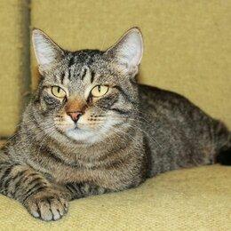 Кошки - Тигран Потапыч, настоящий полосатый кот. В добрые руки., 0