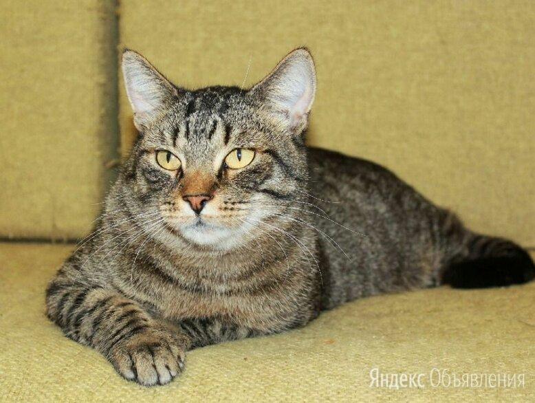 Тигран Потапыч, настоящий полосатый кот. В добрые руки. по цене даром - Кошки, фото 0