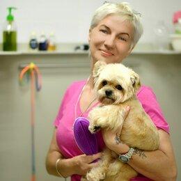 Услуги для животных - Груминг собак и кошек , 0
