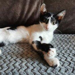 Кошки - Кошка ПусеМуся, 0
