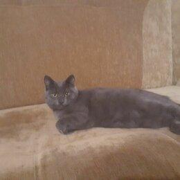 Животные - Пропал кот , 0
