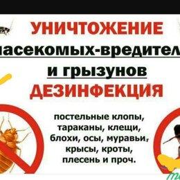 Бытовые услуги - Уничтожение насекомых и грызунов, 0