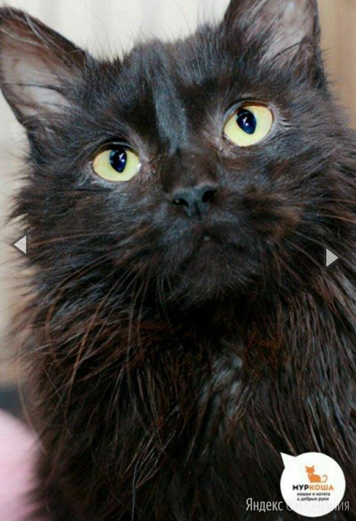 кофейная крошка брауни по цене даром - Кошки, фото 0