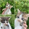 Спасите малышей  по цене даром - Кошки, фото 1