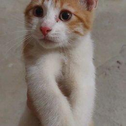 Кошки - Невероятный ласкунчик и игрунчик Рыжик ищет дом, 0