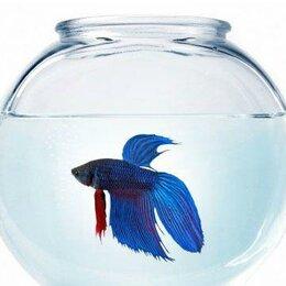 Аквариумные рыбки - Аквариум с рыбкой, декором и кормом, 0