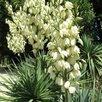 Ягодные и декоративные растения для Вашего сада по цене 150₽ - Рассада, саженцы, кустарники, деревья, фото 2