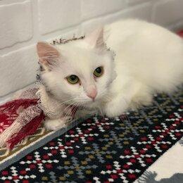 Кошки - Белый котенок гладкошерстный, 0