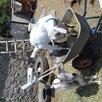 Козлики. по цене 165₽ - Сельскохозяйственные животные и птицы, фото 1
