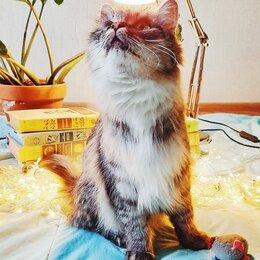 Кошки - Котёнок помеси мейнкуна, 0