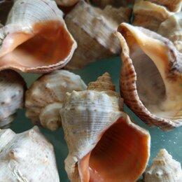 Рукоделие, поделки и сопутствующие товары - Морская ракушка рапан, 0