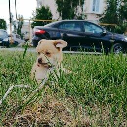 Собаки - Продаю собаку, 0
