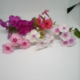 Рассада, саженцы, кустарники, деревья - Многолетники около дома цветут обильно, 0