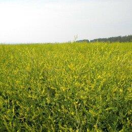 Семена - Семена Донник желтый Сорт: сибирский 2, 0