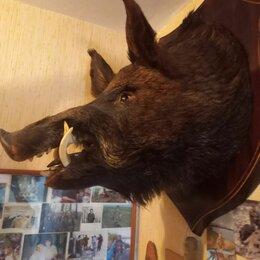 Рога, шкуры, чучела животных - Голова кабана чучело, 0