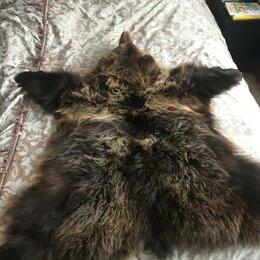 Рога, шкуры, чучела животных - Шкура медведя(имитация) 140х145 см, 0