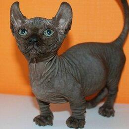 Кошки - бамбино , 0