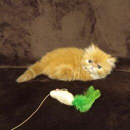Кошки - Персидские котята, 0