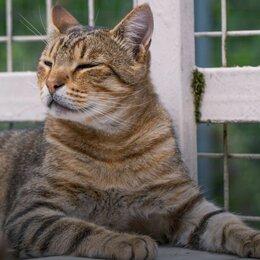 Кошки - Роскошный молодой метис бенгала Дилан ищет дом, 0
