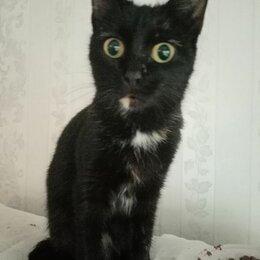 Кошки - Кошка стерилизованная, 0