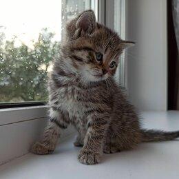 Кошки - Две кошечки, 0