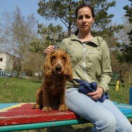 Услуги для животных - Сложные случаи поведения собаки. Дрессировка с понятием., 0
