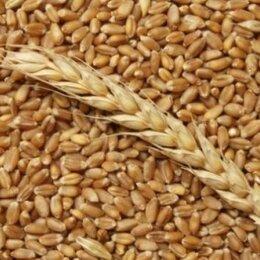 Товары для сельскохозяйственных животных - Пшеница в мешках по 30 кг, 0