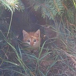 Кошки - Отдаём котят, 0