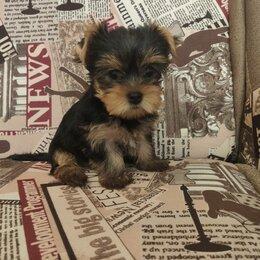 Собаки - Очаровательные малышки!, 0