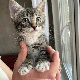 Кошки - Ласковая ручная малышка Ника 2 мес ищет дом, 0