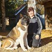 Американская Акита для вязки по цене 35000₽ - Услуги для животных, фото 3