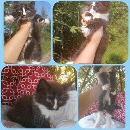 Кошки - Кот интересной окраски, 3 месяца , 0