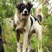 Домашние животные по цене даром - Собаки, фото 1