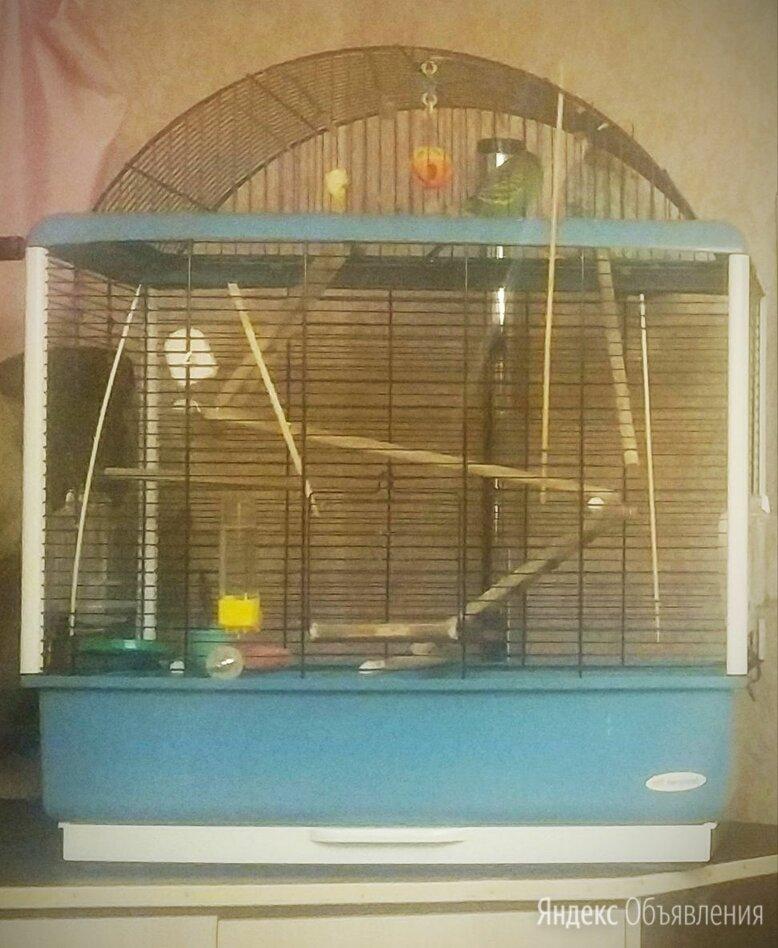Клетка для попугая ферпласт палладио 3 decor по цене 5000₽ - Клетки и домики, фото 0