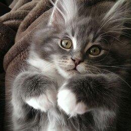 Кошки - Пушистый котенок, 0