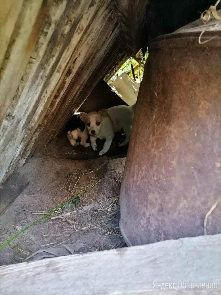 Животные по цене даром - Собаки, фото 0