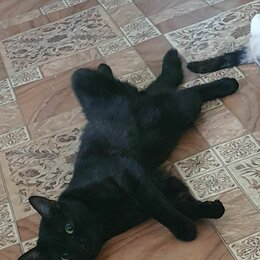 Животные - Домашние коты, 0