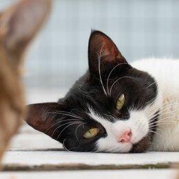 Кошки - Кот в маске бэтмена Томми в добрые руки, 0