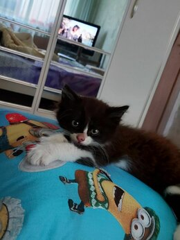 Кошки - Котенок , 0