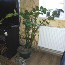 Комнатные растения - декоративные растения, 0