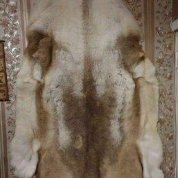 Рога, шкуры, чучела животных - Шкура северного оленя, 0