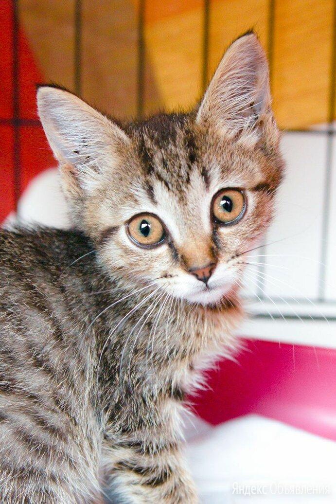Милая и нежная Иванка по цене даром - Кошки, фото 0