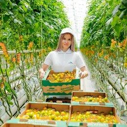 Рабочие - Работник на уборку овощей вахта, 0