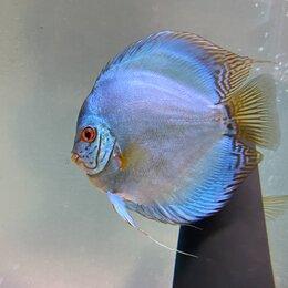 Работа с животными - Уход за аквариумными рыбками, 0