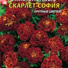 Рассада, саженцы, кустарники, деревья - Бархатцы отклоненные Скарлет София ПЛ, 0