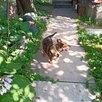 Приют.Маленькая Джульетта 35 см по цене 2000₽ - Собаки, фото 11