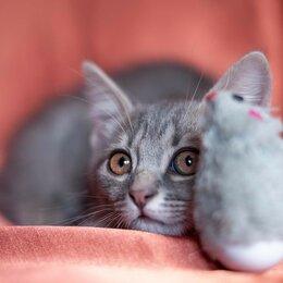 Кошки - Мистер Самые длинные усы, 0