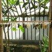 Высоко рентабельный бизнес ферма Живых Бабочек по цене 59999₽ - Сельское хозяйство, фото 8