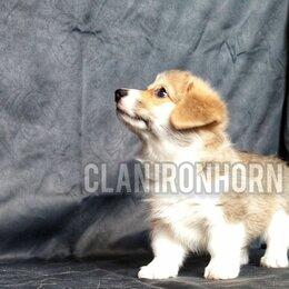 Собаки - Щенок вельш корги пемброк, 0