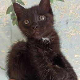 Кошки - В добрые руки котенок мальчик, 0
